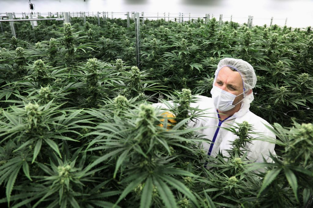 CANADIANS CLAIMING CANNABIS TAX RETURNS, Cannabis culture and Discussion