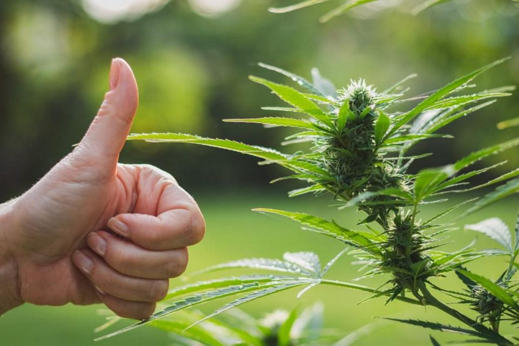 FDA GIVES APPROVAL TO CBD BASED EPIDIOLEX DRUG, Cannabis culture and Discussion