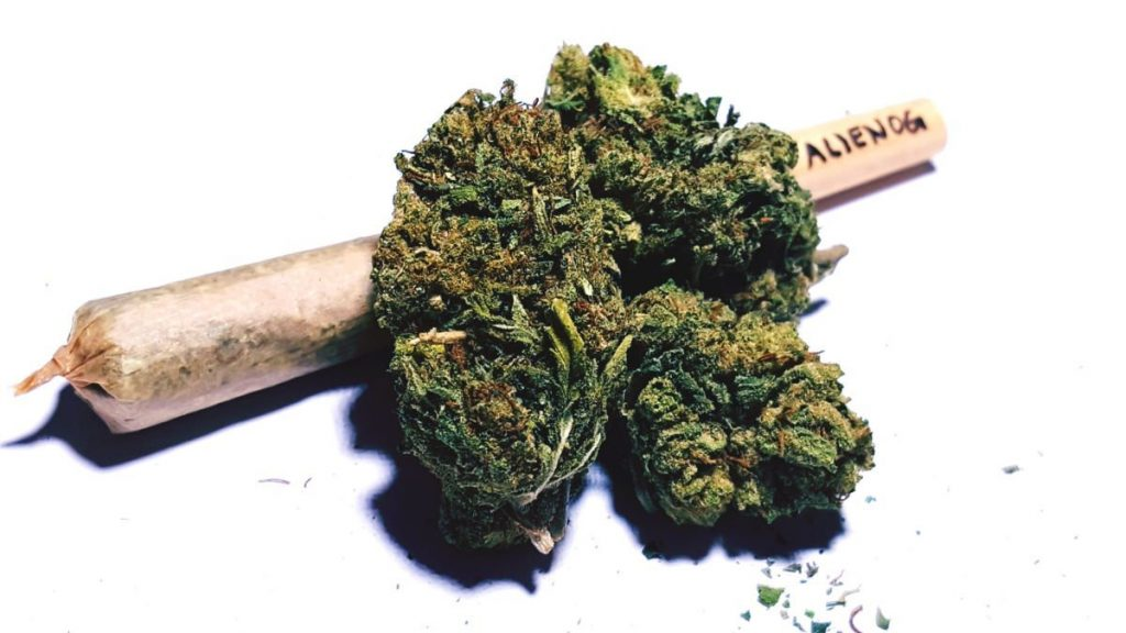 Five Top Low-THC Marijuana Strains, Cannabis culture and Discussion