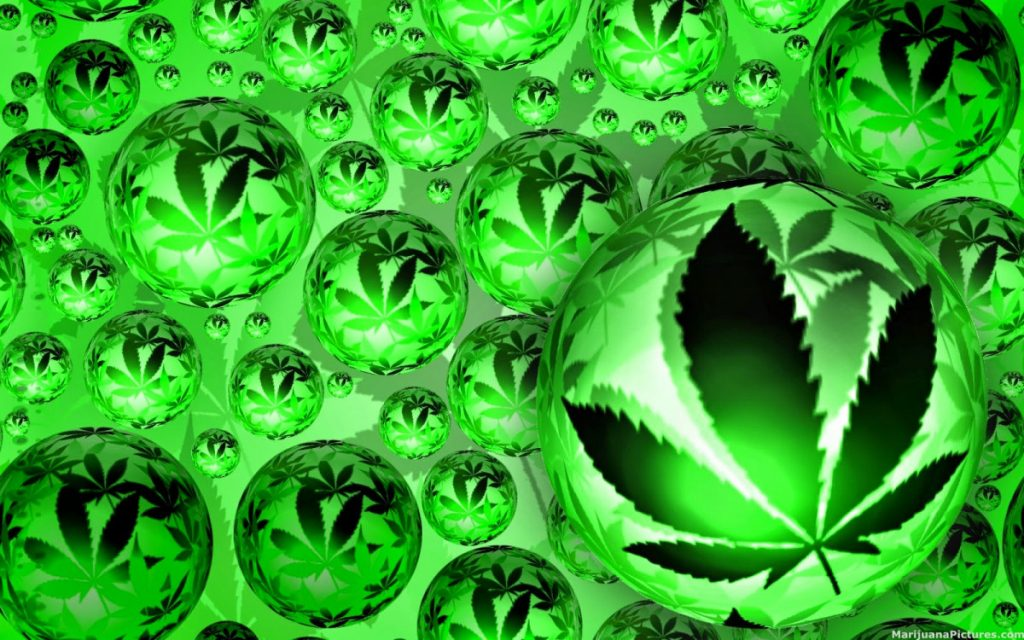 EFFECTS OF CANNABIS: DEALING WITH TOLERANCE, Cannabis culture and Discussion