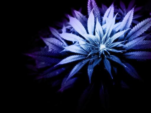 GORILLA GLUE #4 STRAIN REVIEW, Cannabis culture and Discussion